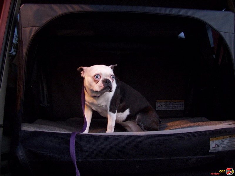Bette Davis and the Honda Element soft kennel