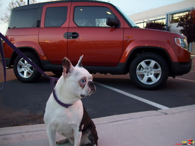 Bette Davis and the Pet Friendly Honda Element